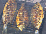 Three Adriatic gilt-poll fishes on the grill